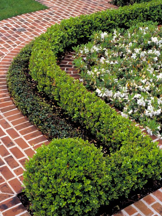 Boxwood Hedge Design Pictures Remodel Decor And Ideas I Like How The Last Plant Is Round Traditional Landscape Walkway Landscaping Landscape Design