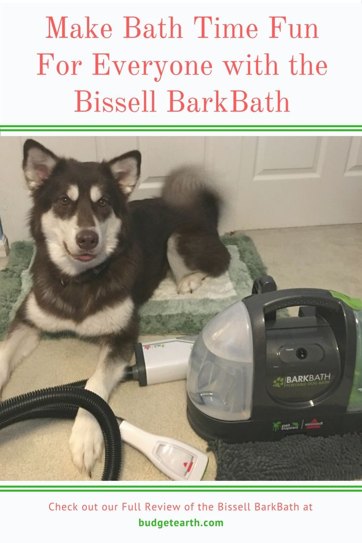 Make Bath Time Fun For Everyone With The Bissell Barkbath