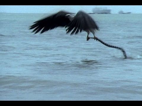 عالم الفيديو عالم تانى Sea Snake Animal Poems Sea Birds
