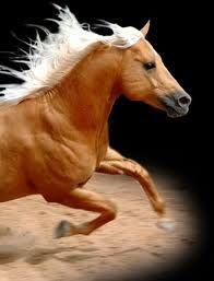 Gorgeous golden horse