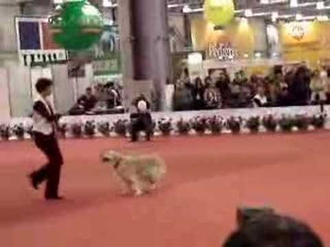 Canine Freestyle Check Out This Awesome Doggy Dance Video D