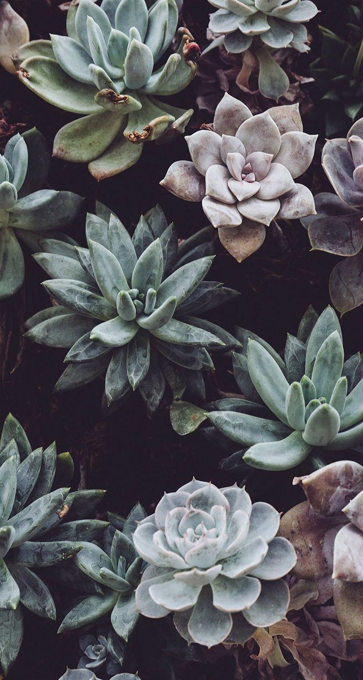 Cacti wallpaper background home in pinterest wallpaper