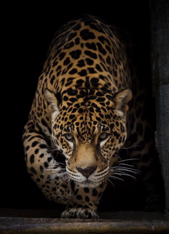 Perfection Animals Wild Cats Animals Wild