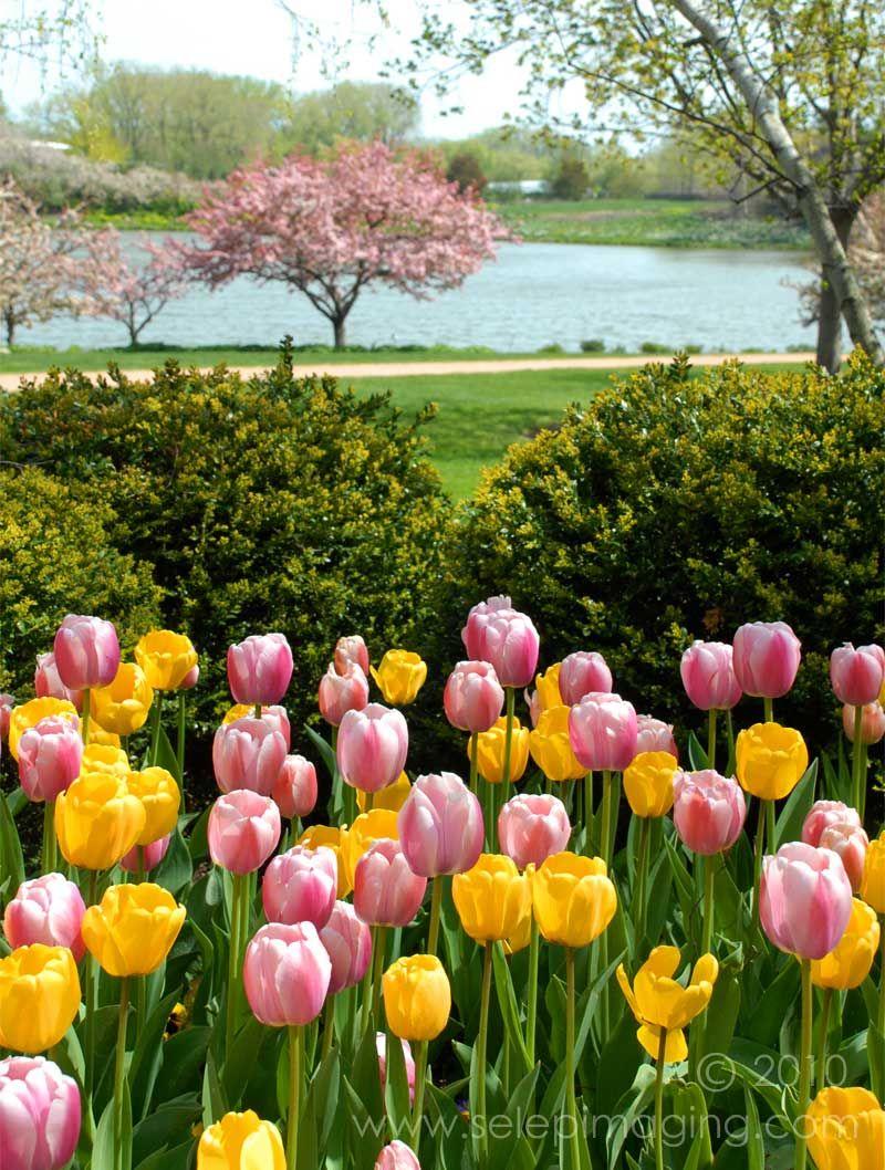 Chicago Botanic Garden With Images Chicago Botanic Garden 400 x 300