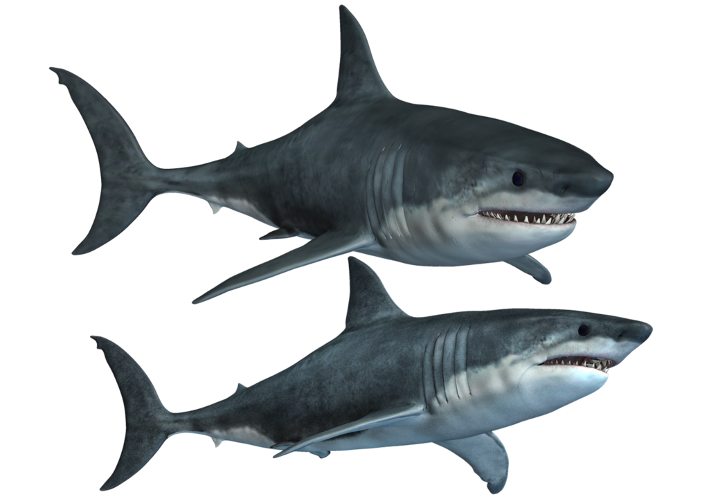 Sharks-2 PNG Stock by Roys-Art on deviantART