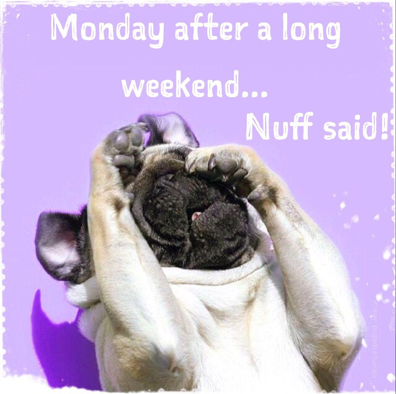 Monday humor Animal funny Cute dog Long weekend