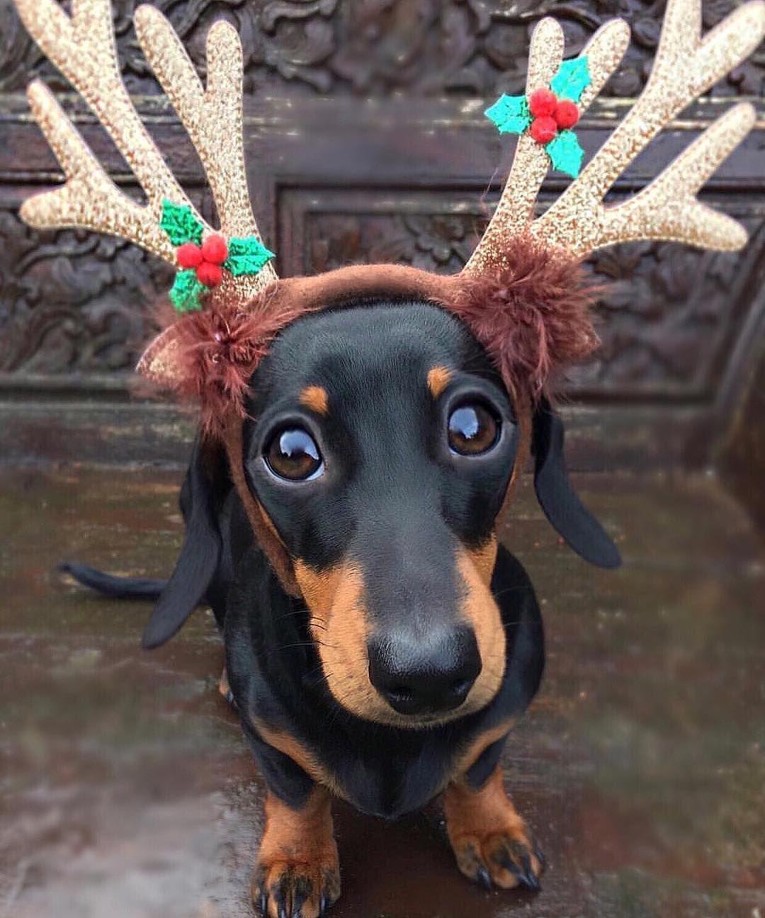 """""""What do you mean Santa's got enough Reindeer"""