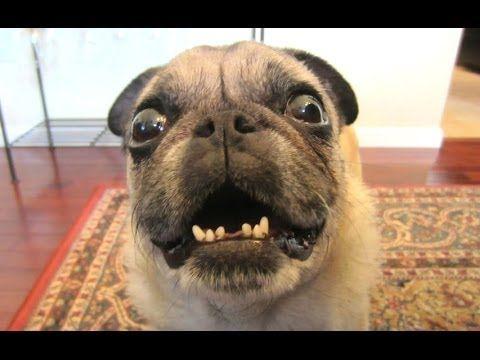 dog barking videos funny