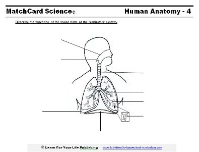 Respiratory system for kids respiratory system worksheets and use the respiratory matchcard to learn how we inhale and exhale ccuart Choice Image