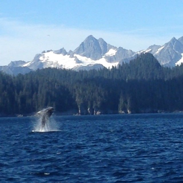 Best whale watching ever. #whales #Alaska #Seward #wildlife #nature #humpback