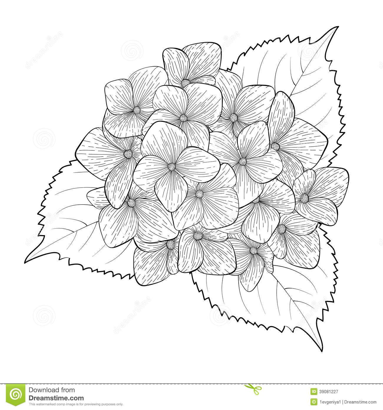 Hydrangea flower coloring pages - Hydrangea Glass Art Google Search