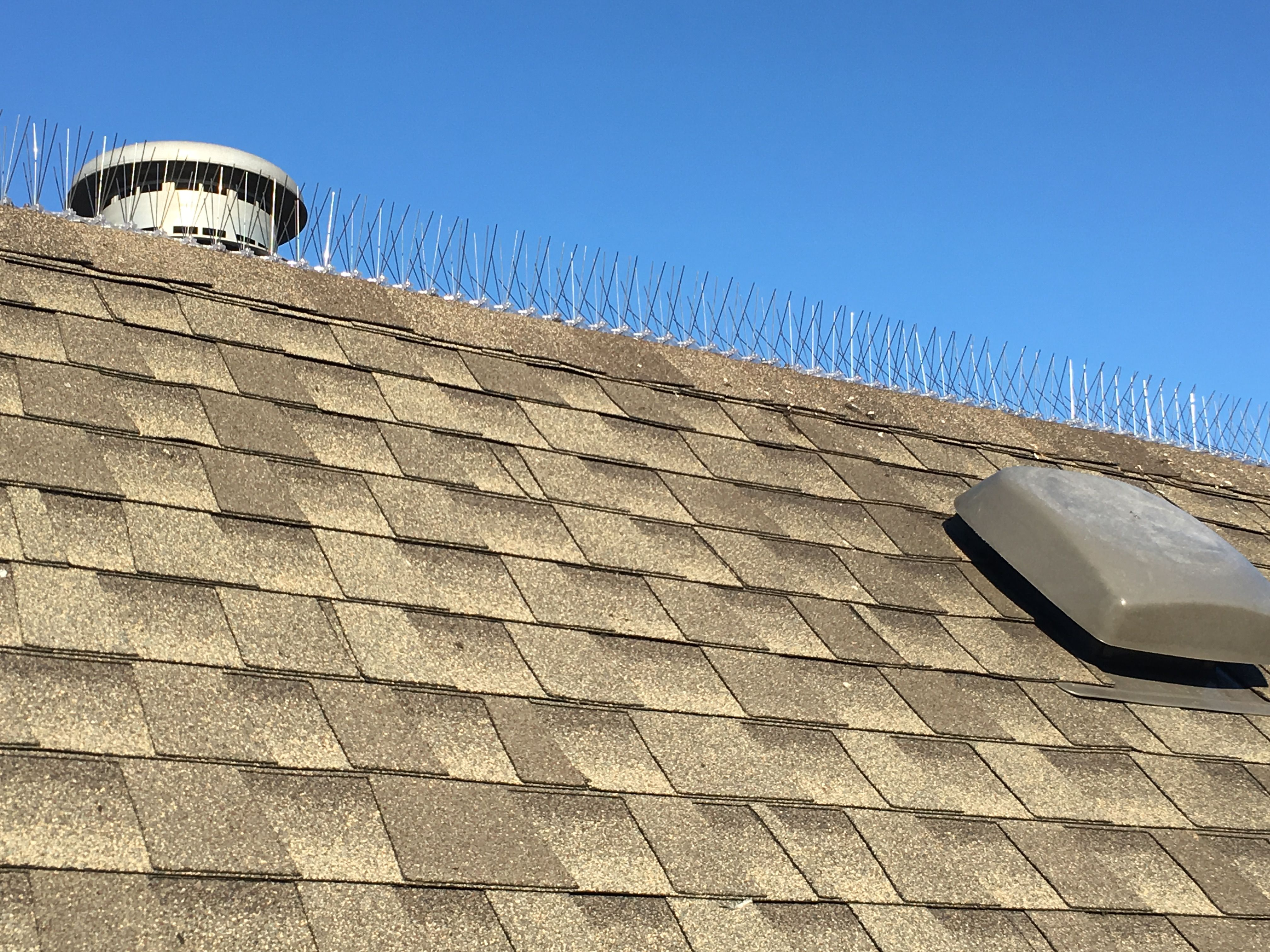 Bird Spike Installation We Specialize In Flat Roof