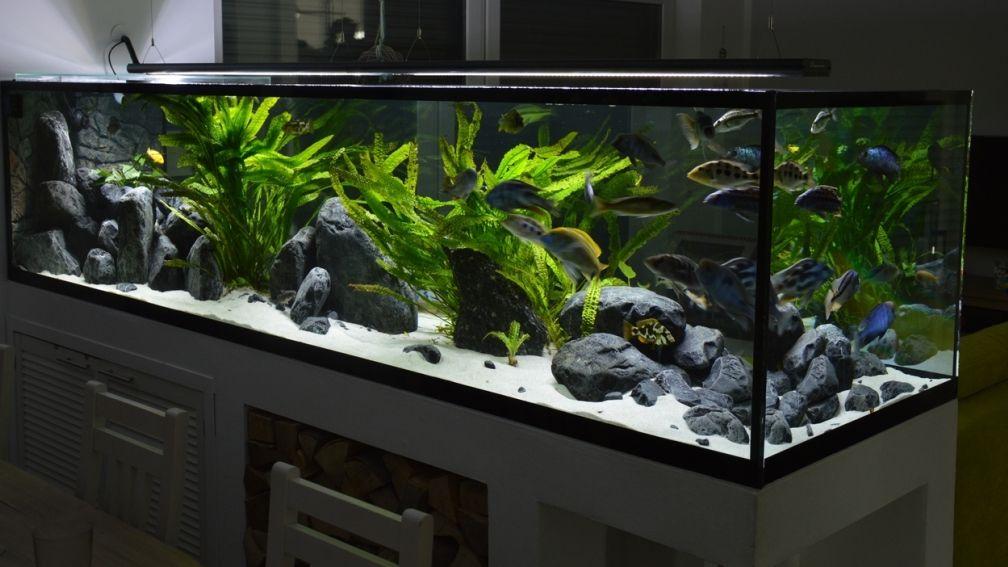 Akvarium Hauptansicht Fon Malavi Predator Bay Aquarium Cichlid Aquarium Aquarium Fish Tank