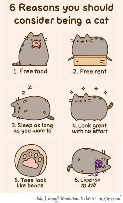How Many Cats Can You Put In An Empty Box : empty, Empty, After, That,, Isn't, Empty., Pusheen, Crazy, Cats,