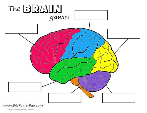 Human Brain Craft & Activities | Homeschooling | Pinterest ...