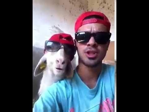 Goat with sunglasses (Thug life) - YouTube