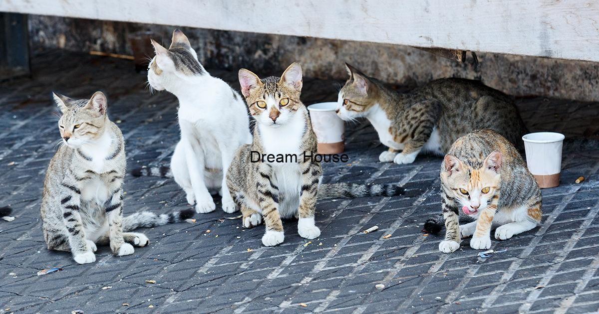 شركة مكافحة القطط الضالة بالرياض وصيد الحيوانات Dog Cruelty Cat Island Cats