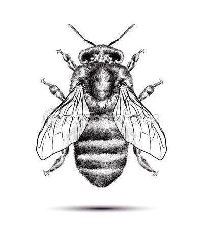 Abeja En Blanco Vectores De Stock Libres De Derechos Arte De Insectos Dibujo De Abeja Arte De Abeja