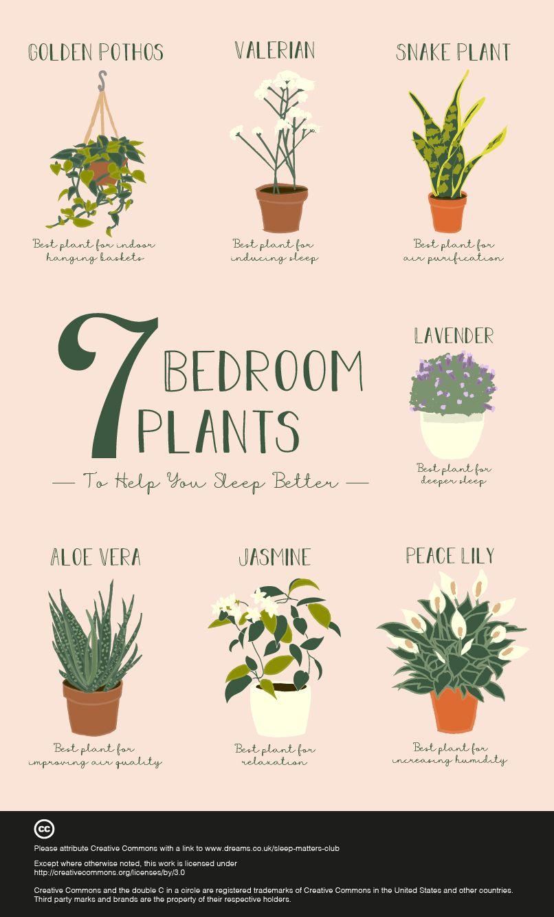 7 Bedroom Plants to Help You Sleep Better   Bedroom plants ...