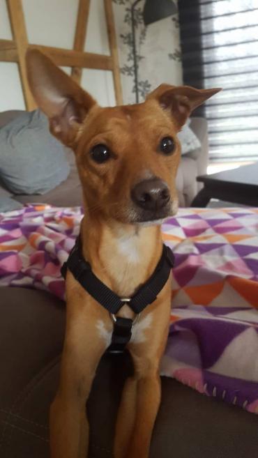 Ringo Hund Mischling Mischling Rude 1 Jahr In Haar Bayern Tierheim Hunde Hunde Tierheim