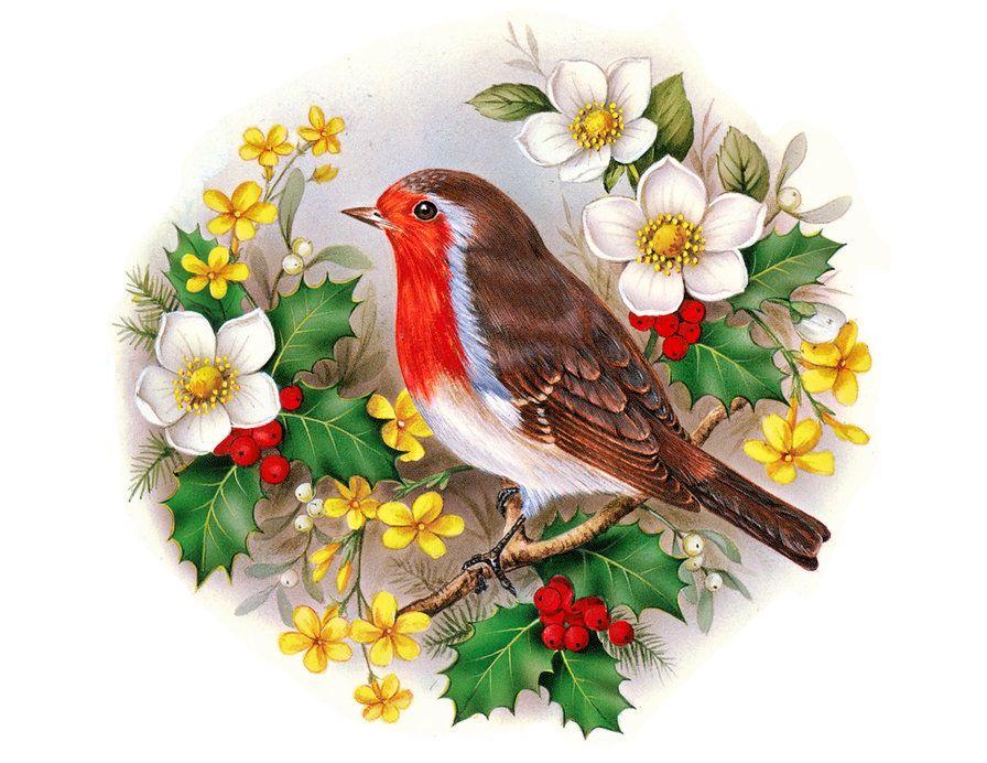 Красивые открытки мультяшные с птичками фото, про совесть