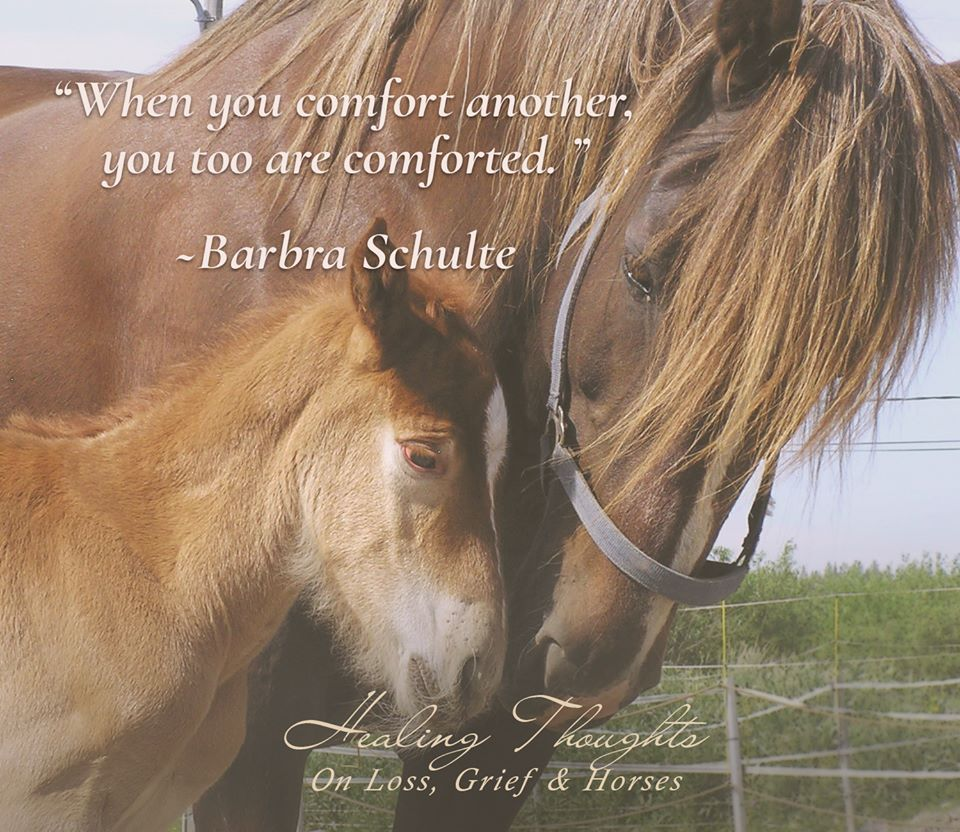 When You Comfort Another You Too Are Comforted Barbra Schulte