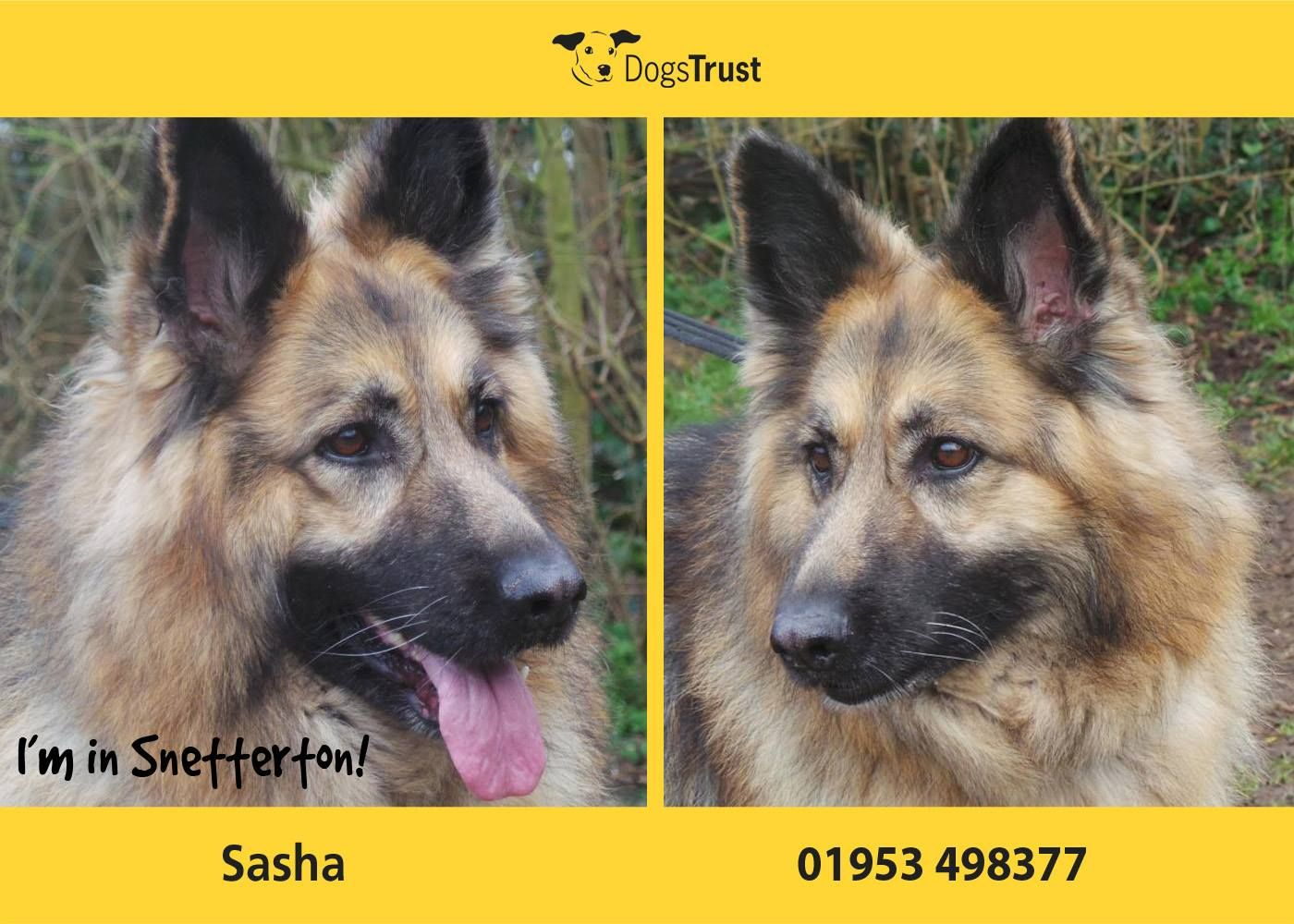 Sasha At Dogs Trust Snetterton Is A Very Sweet Girl Who Once She