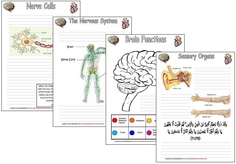 Human Body Notebooking Pages Nerve cell, Science units