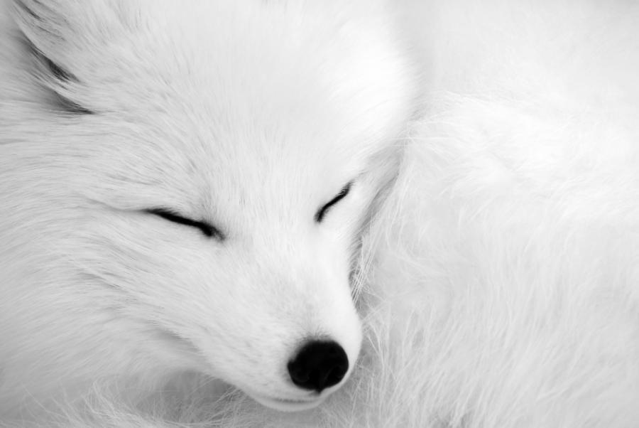 """asleep"" by Alain Turgeon  http://1x.com/photo/22988/"