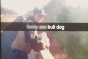 Caught on film, teen throws dog over side of bridge