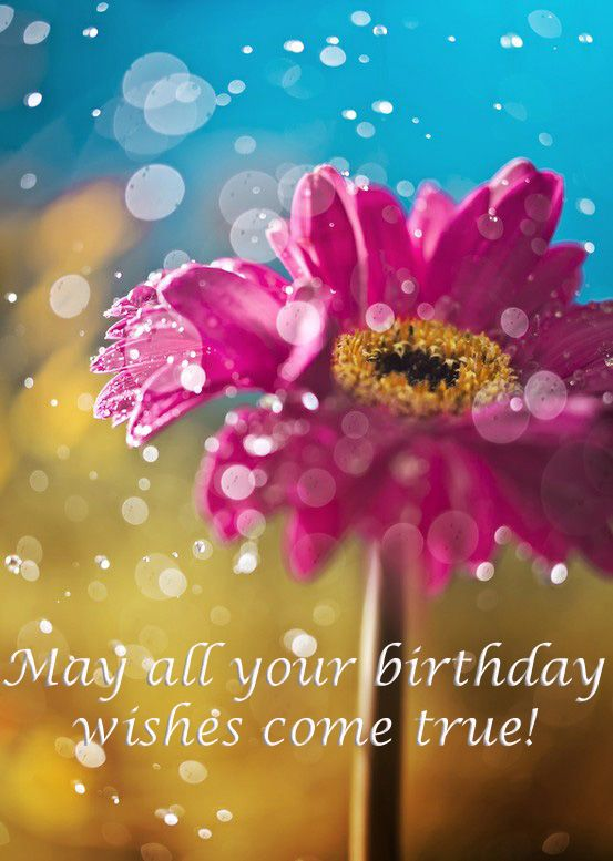 May All Your Birthday Wishes Come True Happy Plants Garden