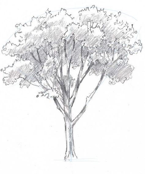 Learn how to draw trees in this simple step by step demonstration of ...