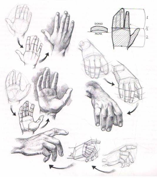 Tutoriales | El Dibujante | DIBUJOS | Pinterest | Anatomy, Drawings ...