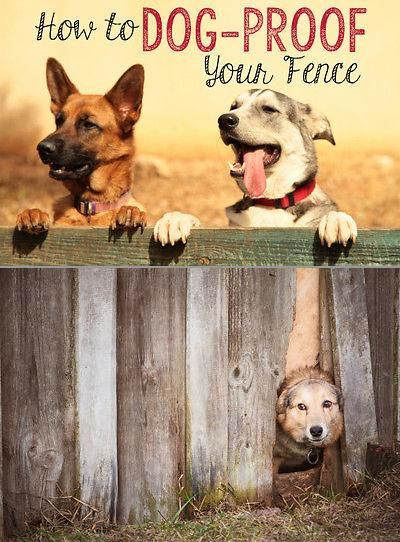 How To Dog Proof Your Fence Pets Dog Proof Fence Dog