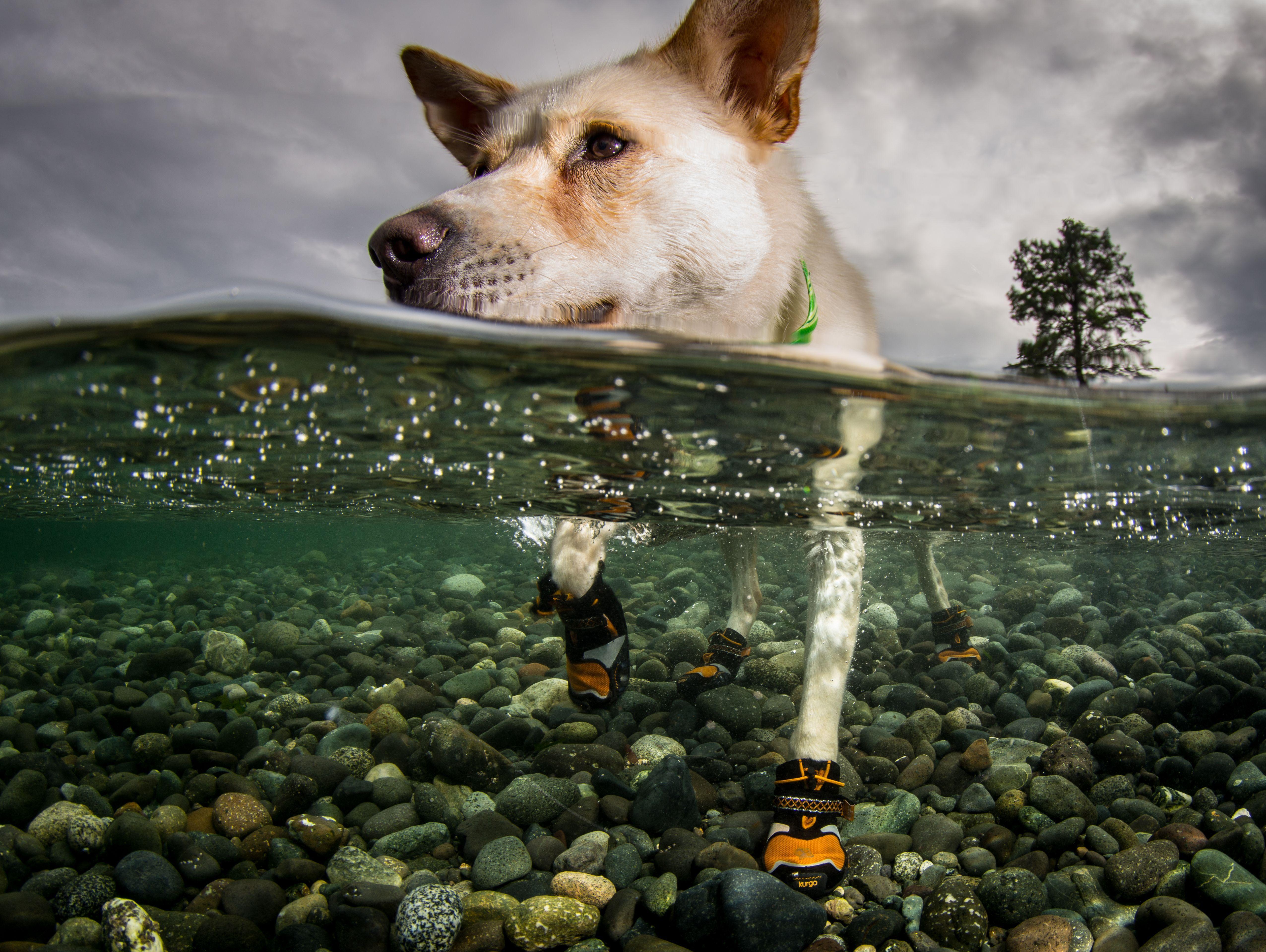 Step-n-Strobe Dog Boots | Dog boots