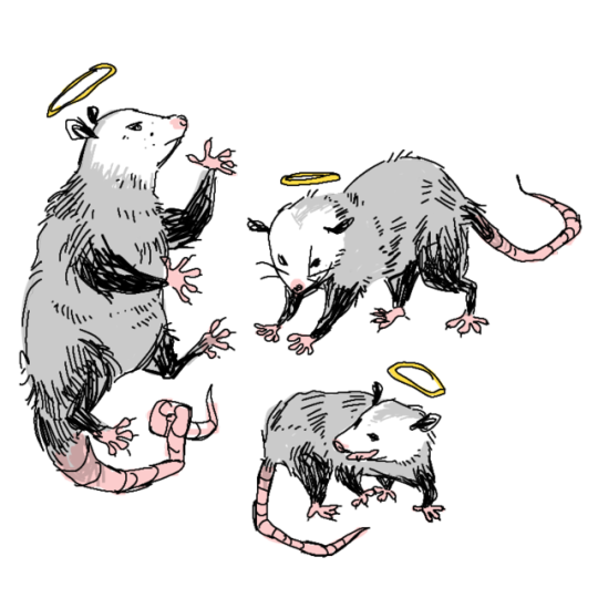 Pin on Horrible little opossums that l love