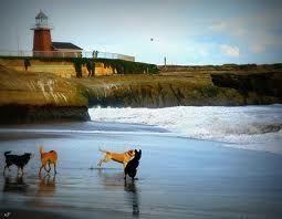 Dogs Beach Westside Dog Beach Surf City Santa Cruz