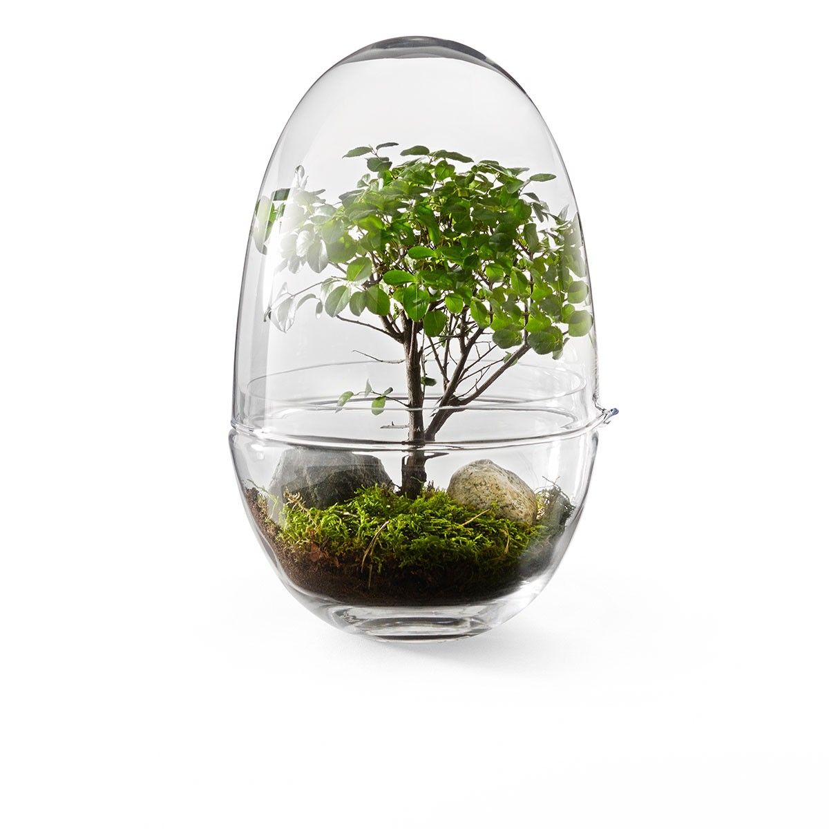 100 Génial Concepts Petit Terrarium En Verre