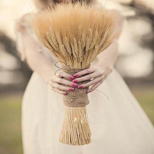 Natural Dry Wheat Grass Stalk Stems x 10 pcs