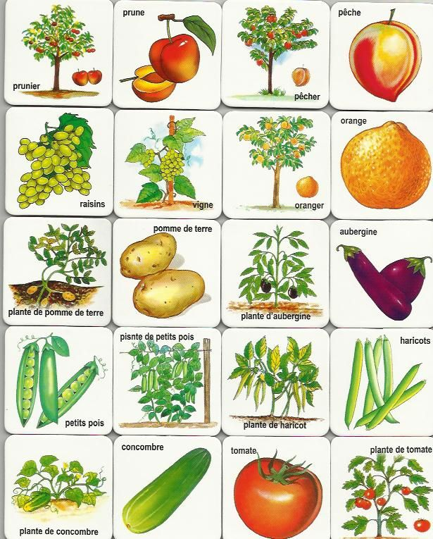 free printable fruits and vegetables cards