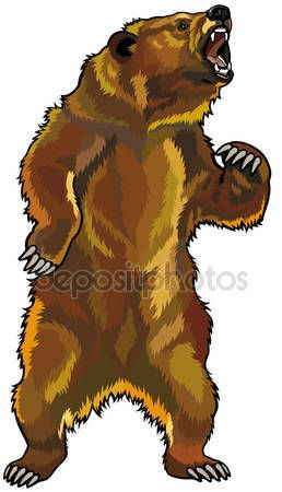 Aggressive Grizzly Bear Bear Illustration Bear Coloring Pages