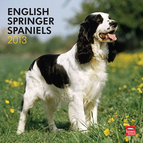 English Springer Spaniels 2013 Wall Calendar With Images Springer Spaniel English Springer Spaniel