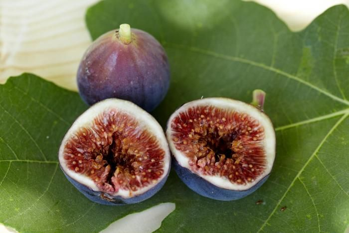 stalking the wild fig gardenista tree seeds black mission fig fig tree tree seeds black mission fig fig tree