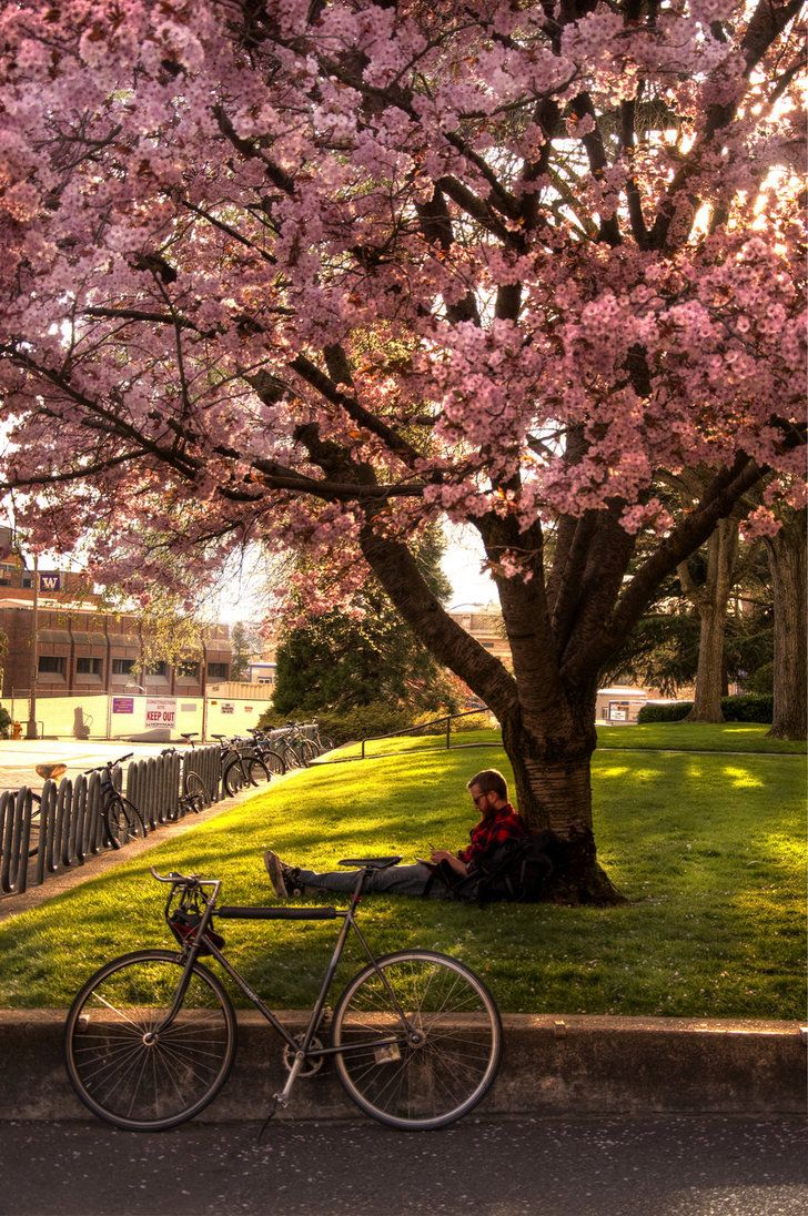 Reading Under The Tree For More Book Fun Follow Us On Pinterest Www Pinterest Com Booktasticfun And Facebo Beautiful Tree Cherry Blossom Tree Blossom Garden