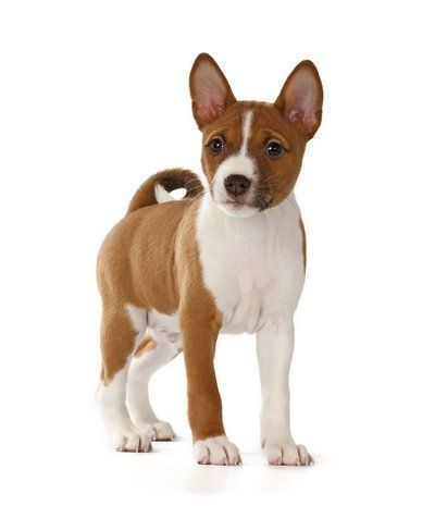 Bon Best Dog Breeds For Small Apartments