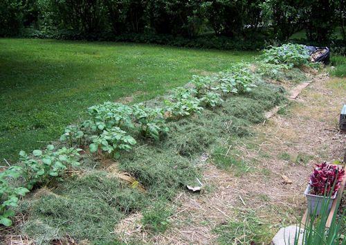 Lasagna Garden Update