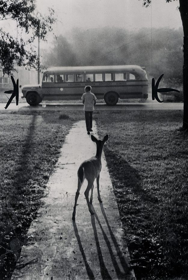 A boy's pet fawn watched him get on the school bus. | 35 Magical Moments Captured With A Camera