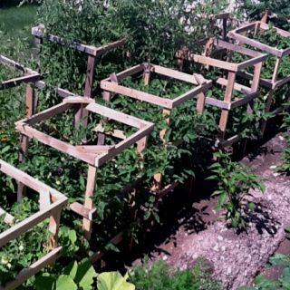 Homemade Tomato Cages Tomato Garden Garden Inspiration 400 x 300