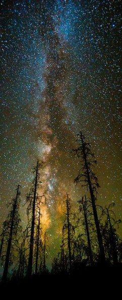 24+  ideas nature tattoo earth stars #tattoo #nature