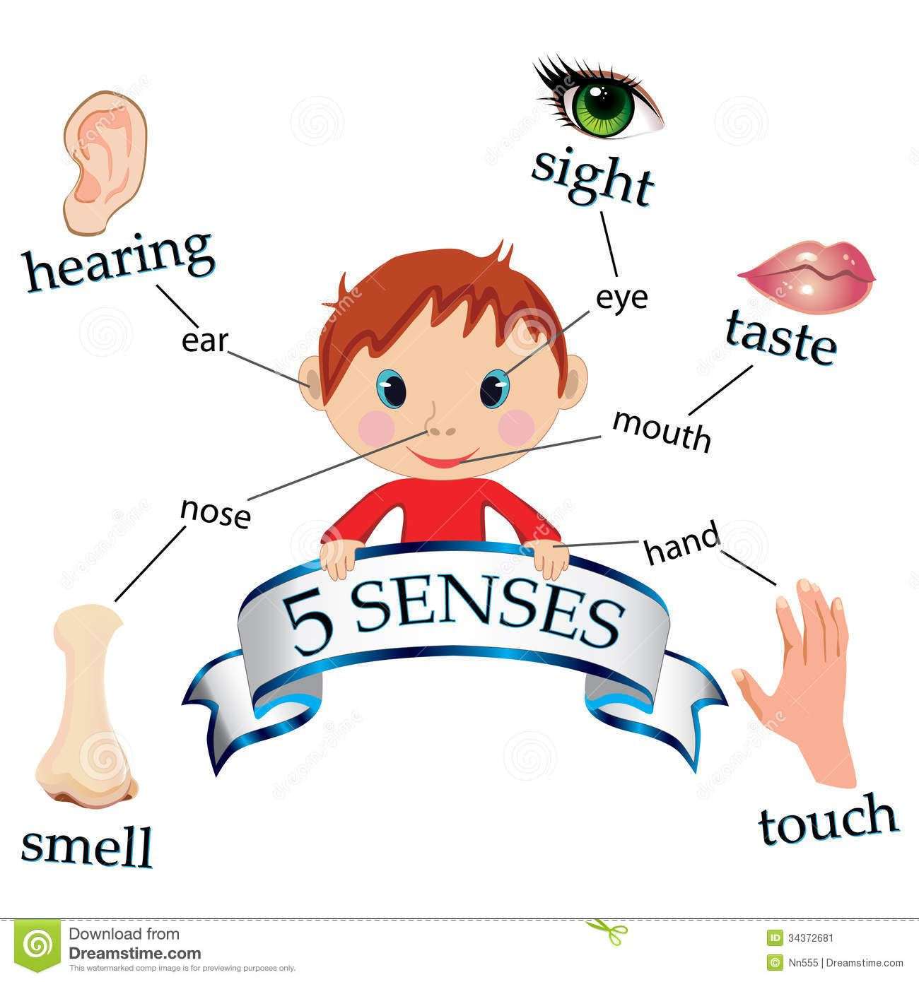 Image Of Kids Five Senses